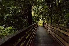 Puentes (Edson-Garcia) Tags: bridge roads travel ketchikan alaska forest nature photography