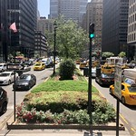Street of Manhattan with green plants thumbnail