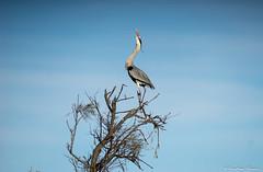 DSC02986 (Tonton-label) Tags: a7 beautiful bird camargue k l m nikkor nikon nikonflickraward provence voyage nikkor400mmf35
