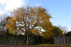 DSC_2237 (PeaTJay) Tags: nikond750 reading lowerearley berkshire gardens outdoors flora fauna plants flowers trees bushes