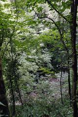 _Sochi_Uschele_Agura_2009_07_05 (Бесплатный фотобанк) Tags: gorge krasnodarkrai river russia sochi агура краснодарскийкрай сочи россия ущелье река природа nature гора большойахун