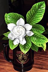 Jazmin (jagar41_ Juan Antonio) Tags: flores flor flora jazmin jazmines blanco
