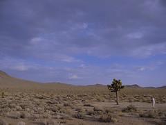 The U2 Joshua Tree (meadowmom) Tags: u2 joshuatree highway190 rockbands