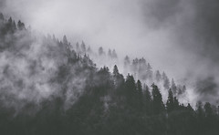 Remote moments (Pan.Ioan) Tags: forest woods trees fog mist woodland nature outdoors beauty pine silhouette weather mountains remote peaceful plant growth day