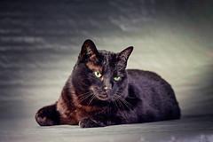 Pepe (Pepenera) Tags: cat cats chat gatto gato gatti black blackbeauty portrait