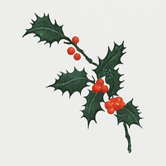 Vintage Christmas holly branch (Free Public Domain Illustrations by rawpixel) Tags: mynt pdcomposite pdproject20 pdproject20batch44 pdproject22 vector pdproject20batch44x antique art arts artwork berries card christmas christmascard christmasdinnerwithhollyleaves christmaspostcard decor decoration decorative drawing frankbuttolph frankebuttolph green historic historical history holiday holidaycard holidaypostcard holly hollyleaves illustration leaf leaves mistletoe name newyorkpubliclibrary ornament ornamental ornate painting postcard print publicdomain retro thebuttolphcollectionofmenus vintage xmas
