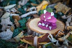 Hamster ( origami ) (Adri 79) Tags: adrianodavanzo canon5dmarkiv sigma105mmf28exdgoshsm origami paper kyoheikatsuta hamster origamitanteidanconvention 24