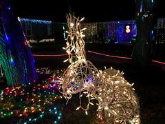 Christmas Lights Reindeer 3 (Lux Llama Productions) Tags: christmas lights holiday holidays winter december jan january dec decor decorations decoration prop jesus usa us unitedstates florida bocaraton house suburb hot light led cool awesome santa sleigh reindeer deer trees tree orb