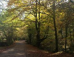 CAMINO OTOÑAL (agustincordoba_g) Tags: otoño paisaje arboles arte agustin ucieda cantabria bosque