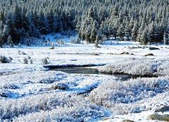 Frost along Tuolumne River, Yosemite, 5-2015 (inkknife_2000 (10 million + views)) Tags: yosemitenationalpark california usa landscapes mountains snowonmountains cahwy120 tiogapassroad dgrahamphoto snow snowontrees easternsierranevada tuolumneriver frost winterbeauty
