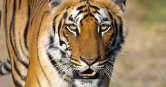 Top 10 Arten, die wir aus persönlichen Gründen bedroht oder zerstört haben (BestenListe) Tags: arten bedroht grunden haben personlichen zerstort