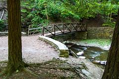 Wolf Creek (Northern Wolf Photography) Tags: 14mm bridge em5 forest letchworth olympus river statepark tree walkway castile newyork unitedstatesofamerica us
