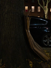 Curve (molybdena) Tags: brooklyn night boerumhill tree recycling curve newyorkcity bark newyork plant cardboard nyc iwalkatnight