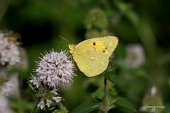 Souci (jpto_55) Tags: papillon proxi fuji fujifilm xe1 fuji55200f3548rlmois hautegaronne france
