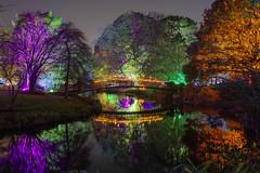 Il parco magico / The magic park (Syon Park, London, United Kingdom)(Buon Natale!!!/Merry Christmas!!!) (AndreaPucci) Tags: london syonpark enchantedwoodland uk night andreapucci