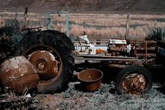 tractor (dietcokenator) Tags: fuji xpro2 tractor oldtractor brokentractor forgotten contrast