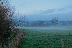 Mists of Morning (scottprice16) Tags: england lancashire clitheroe park field farm path fence trees mist morning cloud damp moisture cold cool winter december 2018 environment weather outdoors pale midwinter colour ribblevalley brungerleypark