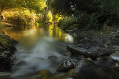 The golden pond (Vic Fine Art Photography) Tags: golden pond water wild wow waterexplore river rural reflection reflections travel trees yellow kern sky sunset forest lake landscape light mountains nature nationalpark beautiful vicactionphotography clouds canon california canon1dx colors coast colour