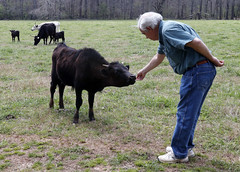 Curtis reaches out to pet one of the younger Texas long horn cattle that his family keeps in a pasture down by the river on their property. He said these cows are used for roping practice, but are kept mostly because his wife enjoys the idea of having cow