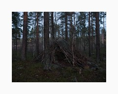 Falun 2018 (Karl Gunnarsson) Tags: falun sweden g80 panasonic20mmf17 sverige dalarna shelter forest woods trees pines rock boulder vegetation dusk twilight