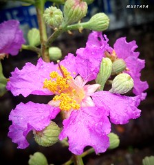 Nature Beauty #nature #beauty #flower #amazing #view #flickr (Mustafa Photography) Tags: amazing nature flickr beauty flower view