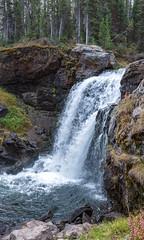 Moose Falls, Yellowstone National Park (Rick Knepper) Tags: fujifilmgfx50s gf45mmf28rwr