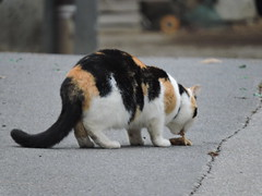DSCN8022 (keepps) Tags: switzerland suisse schweiz vaud brent fall autumn animal cat montreux