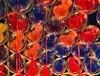 Mouse Balloons (Jeff-A7III) Tags: disneyland disney christmas balloons helium mouseballoons