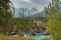Banff National Park, Alberta, Canada (PSHiggins) Tags: canada banff alberta trees river aqua turquoise lush newlife newgrowth fire burnt forest pine mountains rockies peaks snow ice glacier summer august 2018 nikon 35mm d610 fullframe