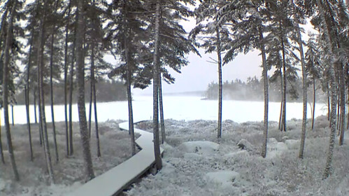 Branch P in Winter - N Morris