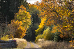 going into the darkness... (Wöwwesch) Tags: colors autumn walk yellow orange brown green sunlight forest path dark trees grases warmth going interesting enjoying light