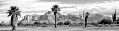 Follow your bliss and the universe will open doors where there were only walls. - Joseph Campbell (Irene2727) Tags: mountains superstitionmoungtains arizona palmtrees trees cactus nature landscape scape pano panorama blackandwhite bw monochrome