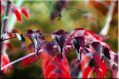 Otoñal (seguicollar) Tags: imagencreativa photomanipulación art arte artecreativo artedigital virginiaseguí color abstracción rojo verde topaz filtros texturas hojas ramas otoño rama leaf leaves
