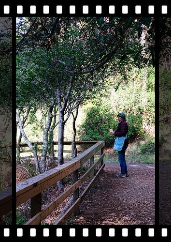 Bird Walk, Tilden Park