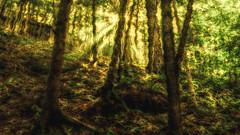 Hocking Hills (Imagery By Antonio) Tags: hocking hills ohio woods trees sunlight