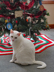Peaches By The Tree. (dccradio) Tags: lumberton nc northcarolina robesoncounty indoor indoors inside tree christmastree holiday christmas november friday dayafterthanksgiving treeskirt crocheted red white green carpet wall cat feline meow purr domesticcat pet housepet candycane ornaments joytotheworld greenery pine ears eyes nose tail whiskers canon powershot elph 520hs photooftheday photo365 project365