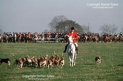 FOX HUNTING Bevoir Hunt, Leicestershire The Field, Master, Huntsman,  FOXHUNT UK (Homer Sykes) Tags: bevoirhunt leicestershire thefield master huntsman hounds riders foxhounds foxhunting hunt hunters fieldsport travelstockuk britain england uk british english countryside 1980s 80s