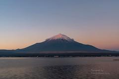 "Pink ""Kasagumo""(cloud) (yamanaito) Tags: mt fuji fujisan fujiyama lake yamanakako clouds kasagumo yamanashi japan 山中湖 山梨 日本 風景 雲 笠雲 湖 朝 ピンク sony α7rii"