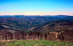 Desolation (lebre.jaime) Tags: highland mountain mountainrange desolation fire devastation portugal beira kodak ektar100 contax g2
