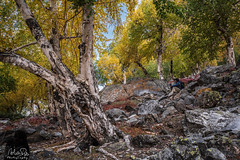 Through the woods (MolviDSLR) Tags: jungle camping landscape naltar woods dawn mountains outdoor walkway pakistan gilgitbaltistan nature nikon wild scenery outside dslr landscapephotography hiking trekking outdoors adventure nikkor lake northernareas mountain khayotnalter pk