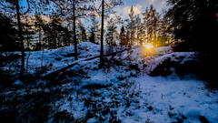 Hältingberget, East-Helsinki, Finland. (Esa Suomaa) Tags: esasuomaa helsinki finland suomi scandinavia winter sun darkforest forest trees trail path olympusomd
