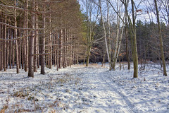 Trail Time ... in the sunshine! (Ken Scott) Tags: snow trail aralroad michigan usa 2018 december winter 45thparallel hdr kenscott kenscottphotography kenscottphotographycom freshwater greatlakes lakemichigan sbdnl sleepingbeardunenationallakeshore voted mostbeautifulplaceinamerica benziecounty