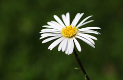 Spring Blooms. (Chris Kilpatrick) Tags: chris canon canon7dmk2 macro sigma105mm outdoor nature edinburgh botanicgardens scotland flower spring