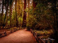 Henry Cowell St Pk- (Jeffrey Balfus (thx for 3.3 Million views)) Tags: felton california unitedstatesofamerica us thegalaxy nikond300s tamronaf18270mmf3563diiivcldasphericalifmacro fences