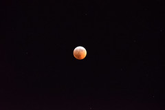 """""""I tell you now the words of Red Moon..."""" (Lunken Spotter) Tags: columbus ohio oh centralohio franklincounty moon sky star stars eclipse lunareclipse supermoon bloodmoon wolfmoon skies night nighttime darkness nightfall evening evenings cold frosty frozen freezing winter wintertime january"""