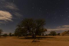 _RJS3716 (rjsnyc2) Tags: 2019 africa d850 landscape namibia night nikon outdoors photography remoteyear richardsilver richardsilverphoto safari sunset travel travelphotographer animal camping nature sky stars wildlife