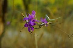 Цветение октября / Bloom of october (Владимир-61) Tags: осень октябрь природа цветы роща цветение autumn october nature flower grove bloom seasonspecific sony ilca68 minolta28135