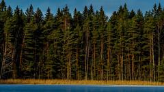 Sipoonkorpi National Park, Finland. (Esa Suomaa) Tags: esasuomaa finland suomi trees forest autumn winter scandinavia europe olympusond