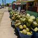 Coconuts in Waimea Hawaii