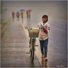 Vietnam - Haut Tonkin - Novembre 2018 (Philippe Hernot) Tags: vietnam tonkin brouillard nikon nikond700 philippehernot kodachrome carré square